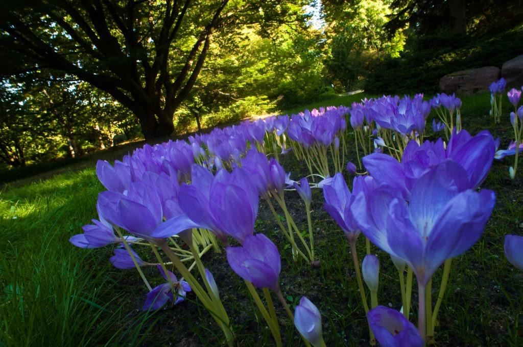 na zdjęciu widać kwiaty wOgrodzie Botanicznym